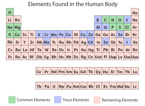the role of ions in body chemistry bob mccauleys blog chemical elements of the human body ask a biologist