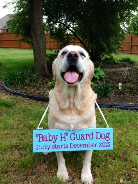 pregnancy announcements with dogs creative and pregnancy announcement ideas