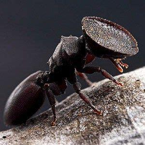 kickass  interesting facts  ants insects weird animals weird creatures