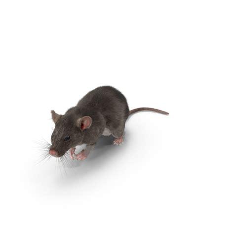 grey rat png images psds   pixelsquid