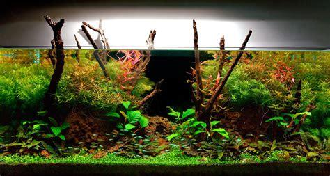 aquarium design group videos my planted aquarium imod