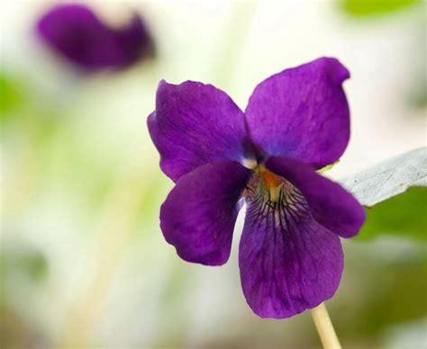 arredare una terrazza con piante amazing viola si tratta di una pianta with come arredare