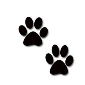 cat paw print conscious