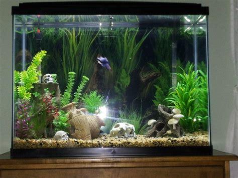 freshwater fish 37 gallon tank hi all 37 gallon tall