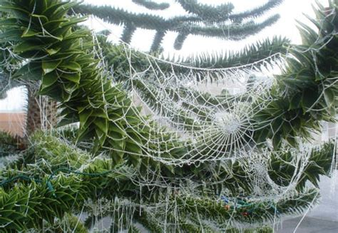 why are spider webs a popular christmas tree decoration 12 strange customs you probably don t hongkiat