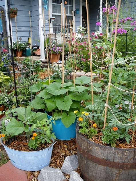 what of soil to use for container vegetable gardens 33 best images about container gardening on