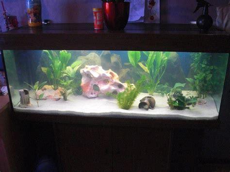 aquarium design eau chaude lancement d aquarium d eau chaude page 7