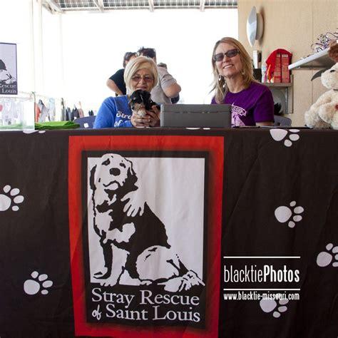 puppy adoption st louis stray rescue st louis days of summer