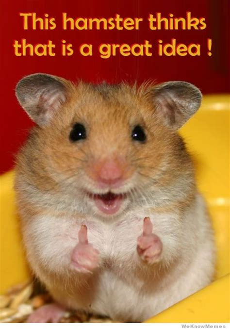 Good Ideas For Memes - this hamster thinks that is a great idea weknowmemes