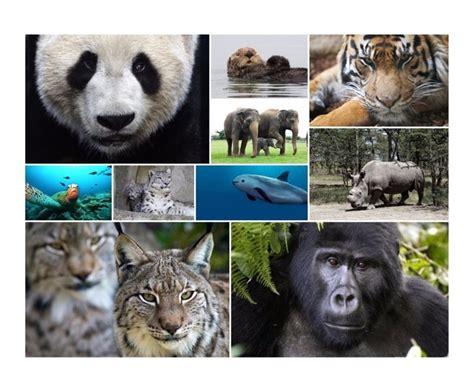 imagenes de animales en peligro de extincin 07 view image d 237 a mundial de los animales 10 especies en peligro de