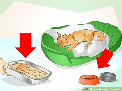 How To Make A Dying Cat Comfortable At Home How To