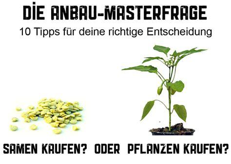 Pflanzen Kaufen by Chili Pflanzen Kaufen Chili Samen Kaufen 10 Top Tipps