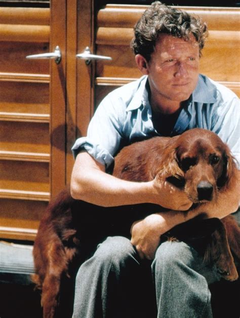 irish setter dog movie 33 best spencer tracy images on pinterest classic