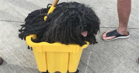 mop dogs mop is the best thing on the right now