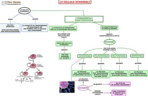 cellule staminali le cellule staminali ist superiori aiutodislessia net