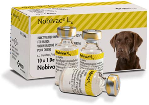 lepto for dogs nobivac lepto 2 vaccination for dogs viovet