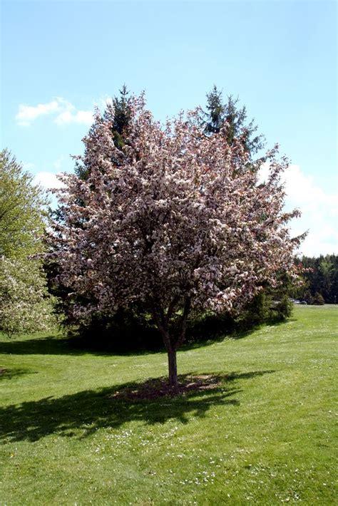 A Tree - tree jpg