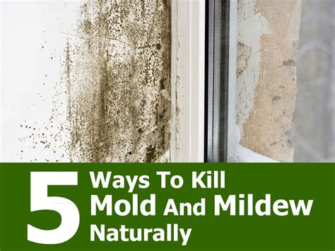 how to kill mold on walls of bathroom kill bathroom mold naturally bathroom trends 2017 2018