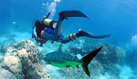 best dive locations top 30 best scuba diving locations