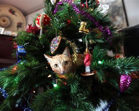cats seem to love christmas tress 22 pics