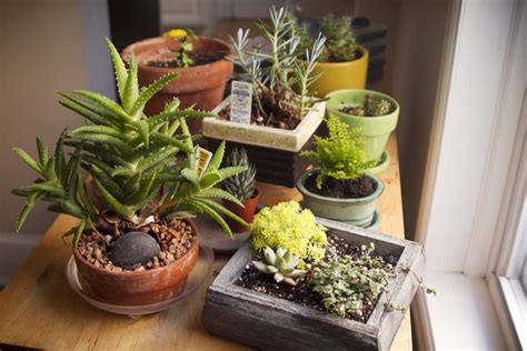 25 indoor and outdoor succulent gardens of all sizes garden lovers club