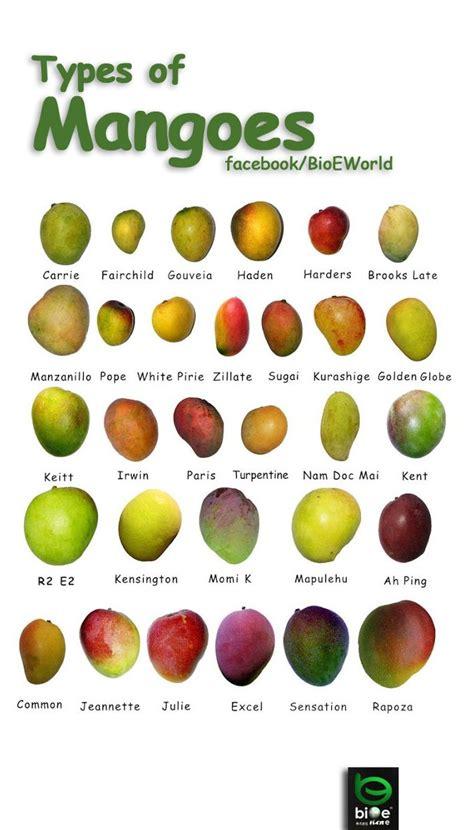 types  mangoes    mango varieties mango