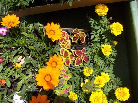 Spring Flowers Gardening Wallpaper 1417287 Fanpop Images Garden Flowers
