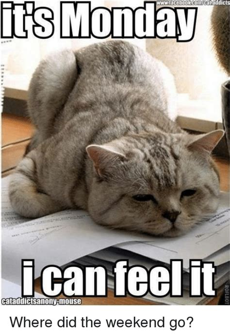 Where Did Memes Come From - its monday cataddicts can feel it cataddictsanony mouse