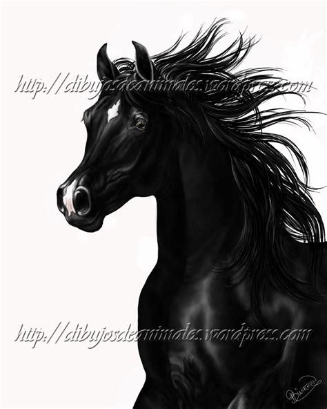 imagenes a blanco y negro de caballos dibujo de caballo dibujos de animales
