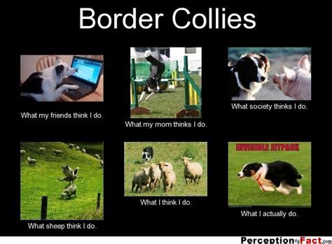 Border Collie Meme - my mom thinks i do what i think i do what i really do meme
