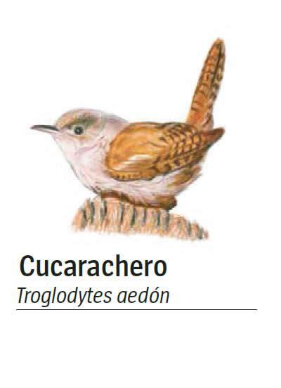 inventario ilustrado de aves 8416721017 cucarachero com 250 n inventario de aves inventario de aves universidad parque universidad eafit