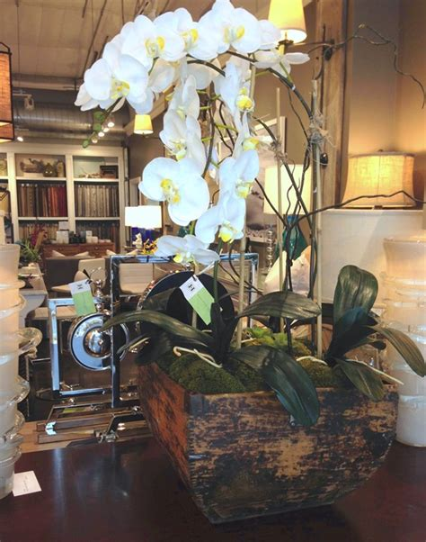 orchids archives home design
