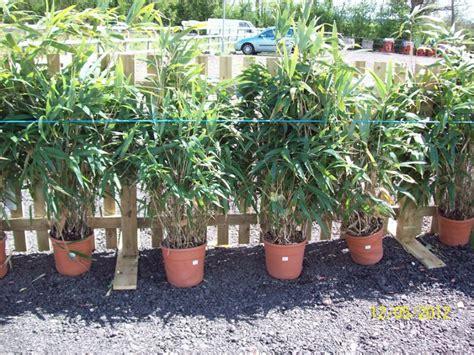 shrubs perennials grasses