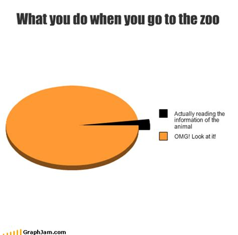 What Are You Going To Do On This Sunday by Friday Zoo Edition Random Lifestyle