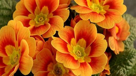 Orange Flowery stunning orange flowers