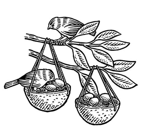 coloring page bird feeder how to make an orange birdfeeder coloring page bird feeder