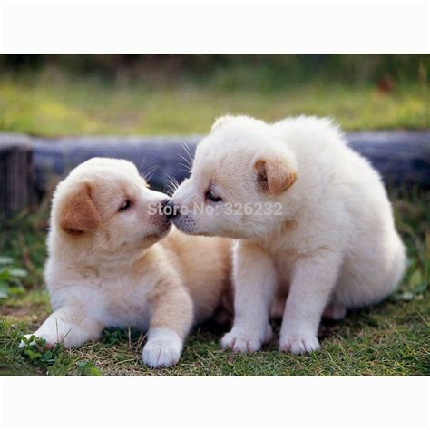 two puppies two puppies www imgkid the image kid has it