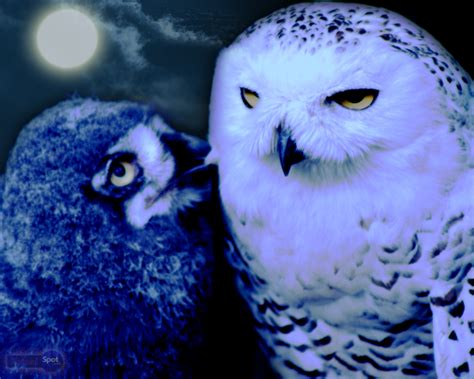 colorful owl wallpaper owl wallpapers animal spot