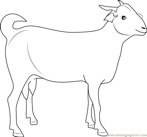 goat coloring pages indian goat coloring page free goat coloring pages