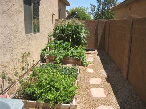 Information About Rate My Space Questions For Hgtv Com Arizona Vegetable Garden