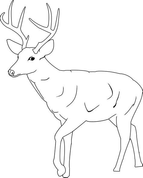free coloring pages of deer buck