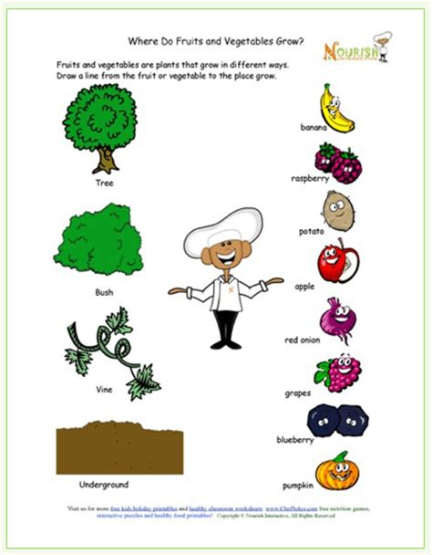 Gardening Worksheets Printable Learning About How Food Grows Free