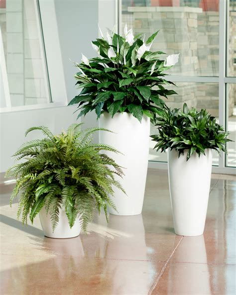 deluxe silk fern planter for home or office decorating at