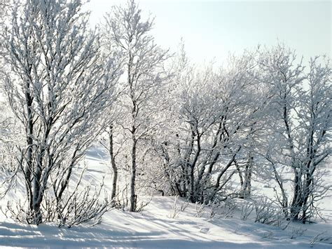 snow images winter snow wallpaper 17348