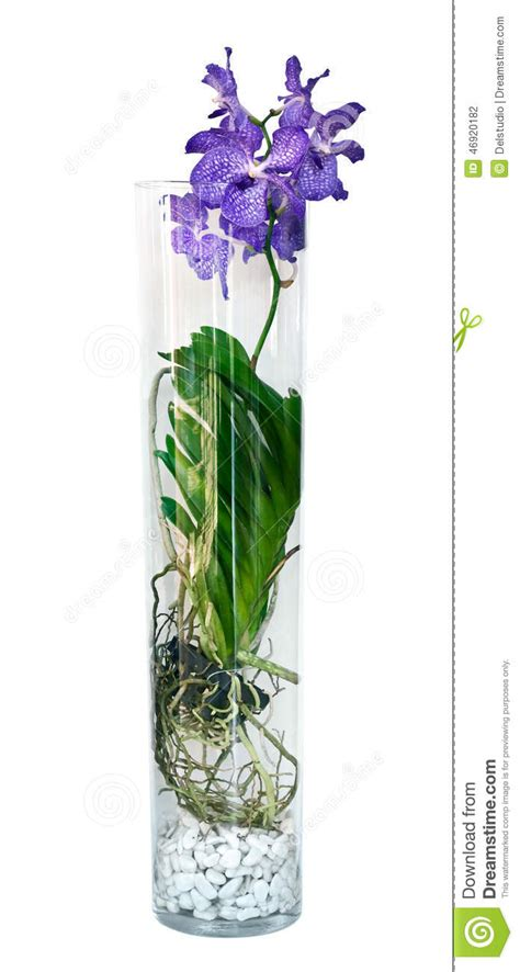 Vanda Orchids In Glass Vases by Purple Vanda Orchid Flower In A Glass Vase Stock Photo