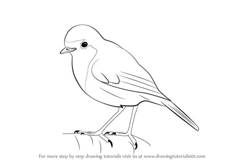 steps on how to draw doodle learn how to draw a robin birds step by step drawing
