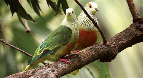 easter island birds tahiti to easter island marquesas tuamotus and