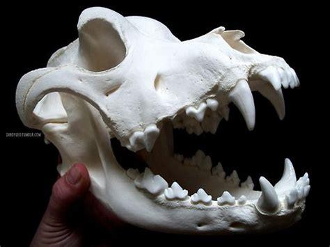 rottweiler skull rottweiler skull by shadyufo
