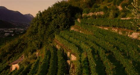 cooperativa sociale il gabbiano cooperativa sociale quot il gabbiano quot i vini