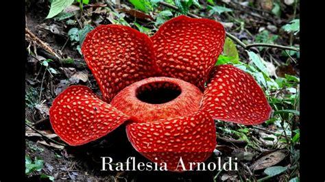 membuat makalah flora dan fauna flora dan fauna di indonesia youtube